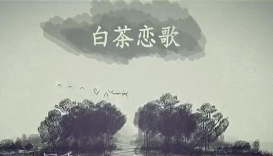 桑植白茶恋歌