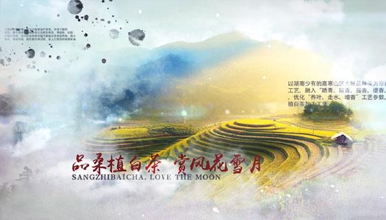桑植白茶宣传片