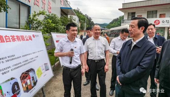 湖南省委副书记、省长许达哲视察湘丰桑植白茶公司
